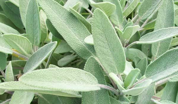 5 piante e erbe di bellezza